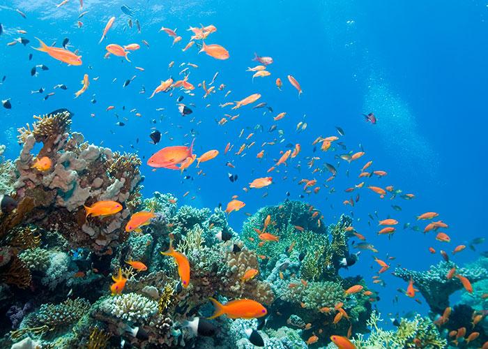 aquarium2-700x500